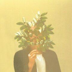 French Kiwi Juice - French Kiwi Juice